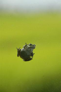 雨蛙09.8.18.jpg