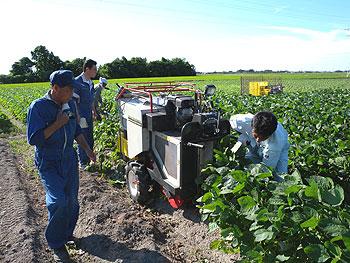 枝豆収穫機.jpg