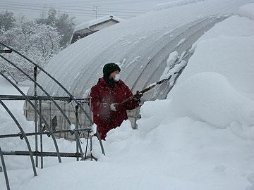 ハウス除雪.jpg