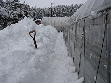 ハウス除雪後.jpg