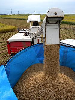 籾排出.jpg