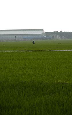 田んぼの景色.jpg