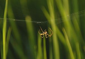 蜘蛛08.8.4.jpg