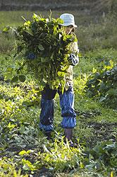 大峰かおり収穫08.10.7.jpg