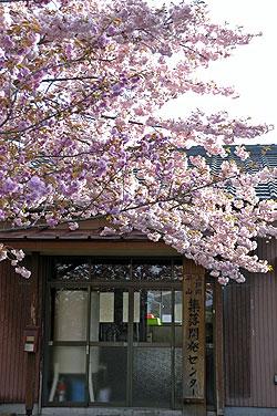 八重桜09.4.25.jpg
