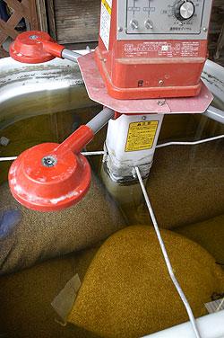 種籾浸種.jpg