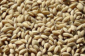 種籾8.3.18.jpg