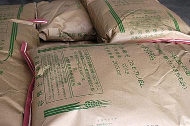 コシヒカリ種籾.jpg