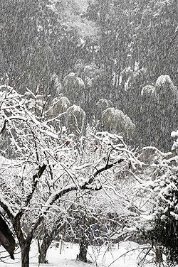 雪降り.jpg
